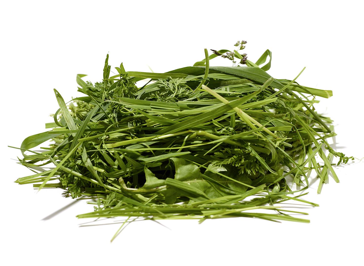Gras vor der Aufbereitung